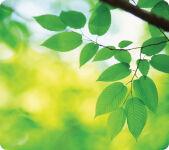 Fellowes tapis souris EARTH, motif: feuilles, rectangulaire